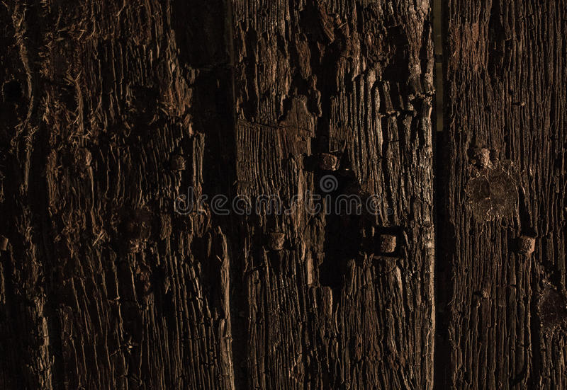 Old Woods. Texture close up stock photo