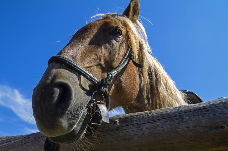 Old workhorse. royalty free stock image