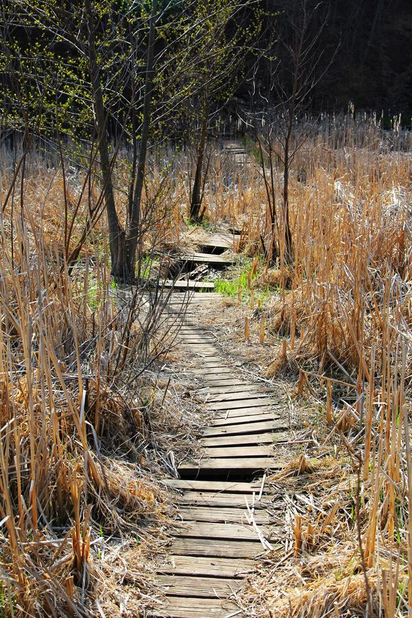 A old, worn out Board walk through a marshy area along the Genesee River royalty free stock image