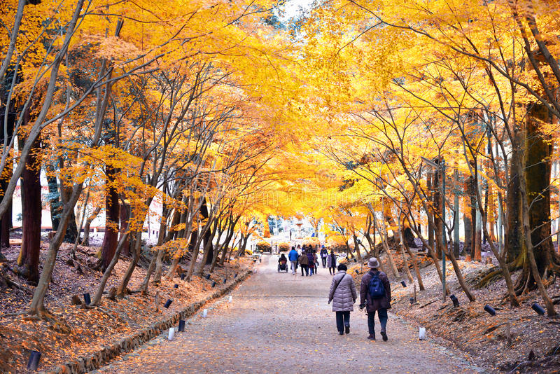 Older couple walk through the autumn leaves royalty free stock image