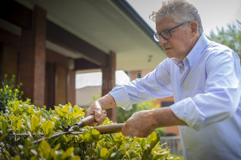 Older man gardening stock photos