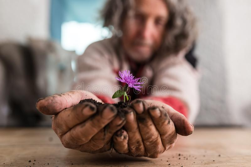 Older man holding out a small purple flower royalty free stock photo