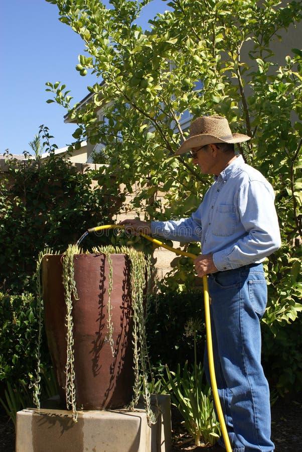 Older Man Watering/Gardner stock image
