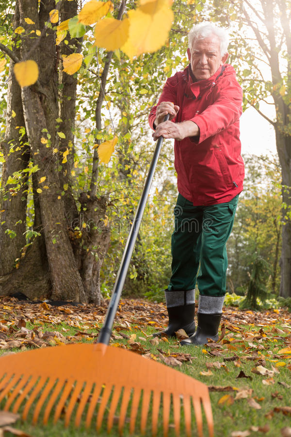 Older man while working in the garden royalty free stock photo