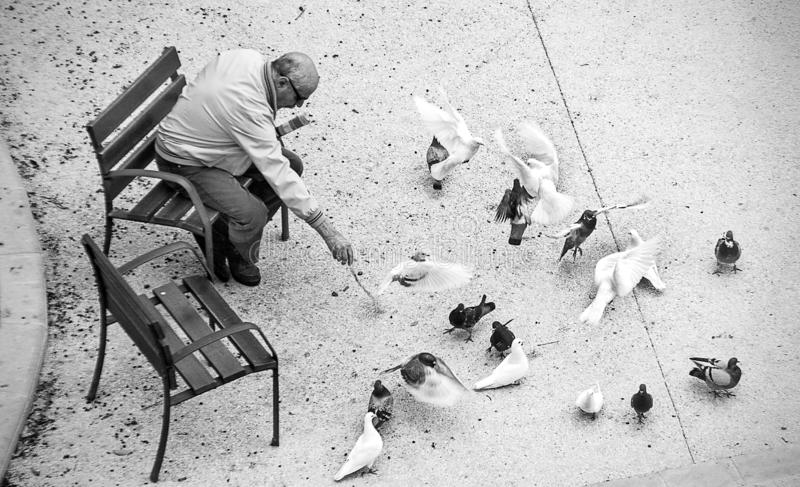 An older person sitting feeds several pigeons from the Marq park stock photos