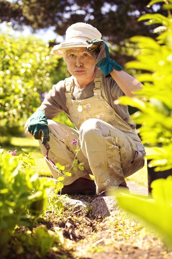 Older woman working in garden feeling tired stock images