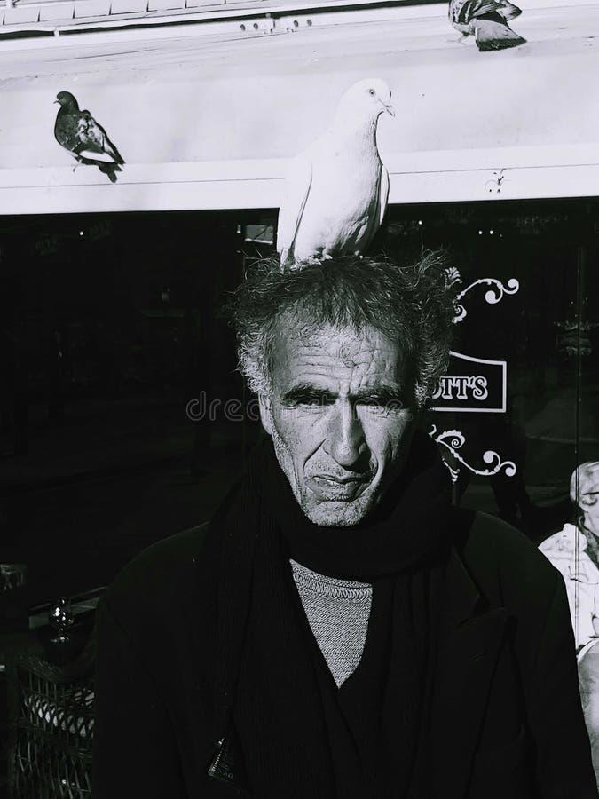 Oldman mais o pombo fotografia de stock royalty free