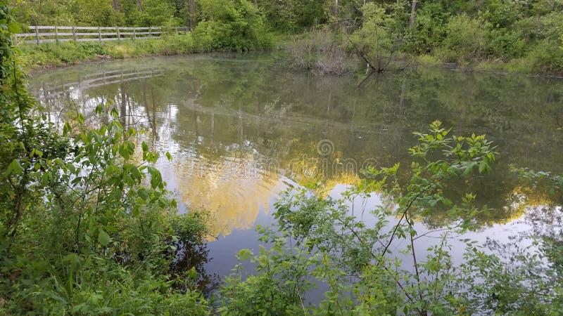 Oldtown Creek Preserve Free Public Domain Cc0 Image
