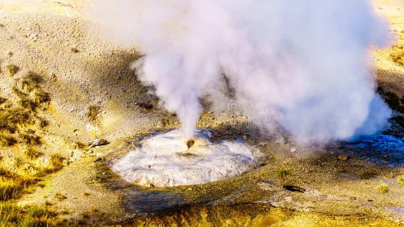 Oleado de ventilación Geyser en la cuenca porcelana de la cuenca de Norris Geyser en el Parque Nacional Yellowstone en Wyoming, E fotografía de archivo