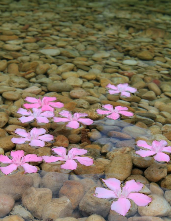 Download Oleander Pink Flowers Floating In Freshwater Stock Image - Image: 17169115