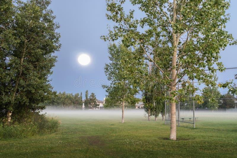 Oleskiw公园,埃德蒙顿,亚伯大 库存照片