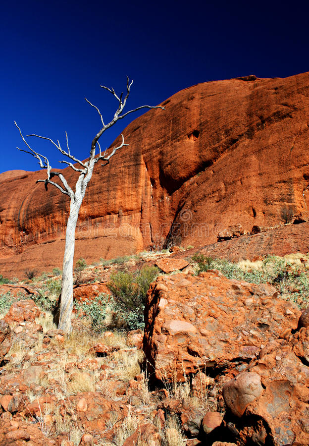 The Olgas, Northern Territory royalty free stock photos