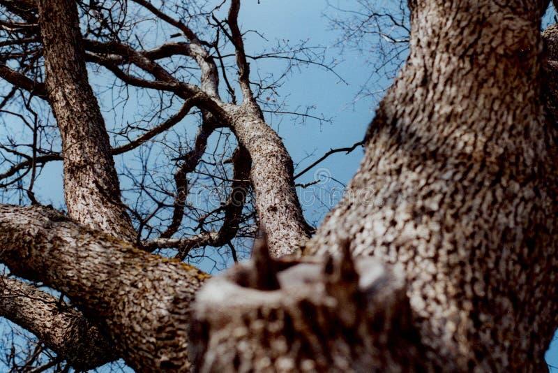 Olhando acima a árvore 1 fotografia de stock royalty free