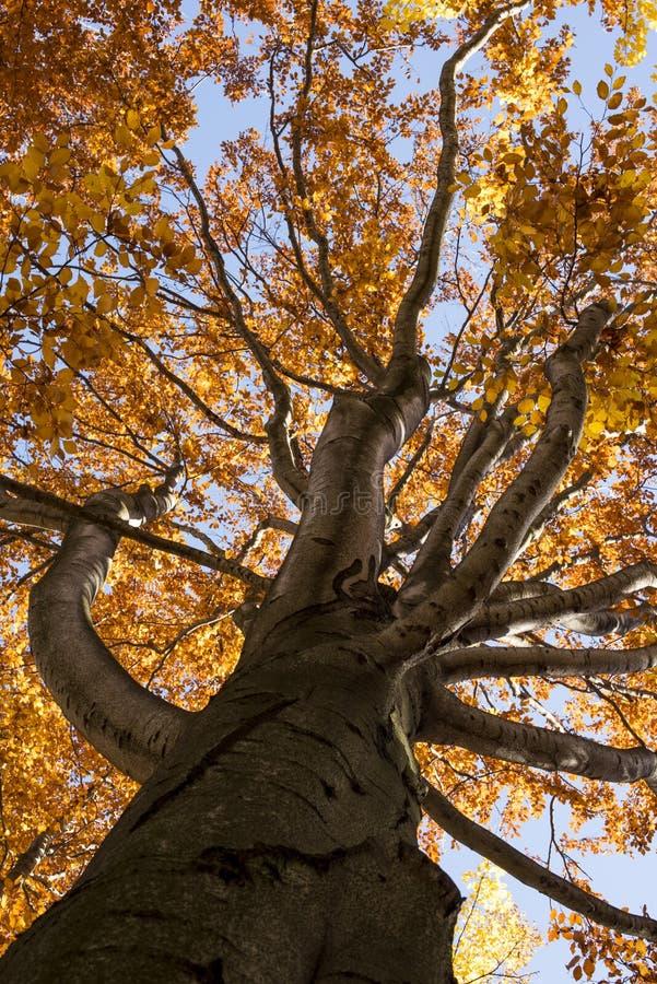 Olhando acima a árvore imagens de stock