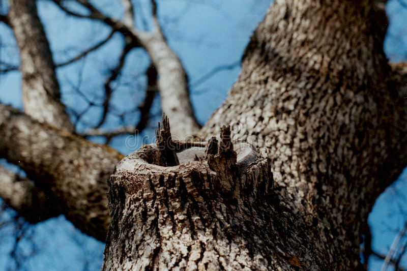 Olhando acima a árvore 2 fotos de stock royalty free