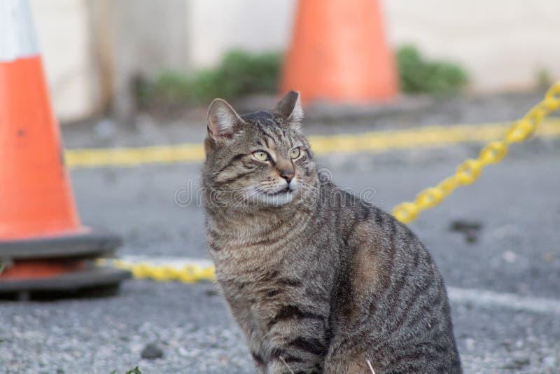 Olhando o gato de aleia imagens de stock royalty free