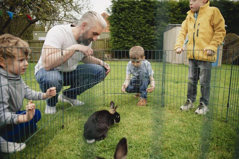 Olhando os coelhos foto de stock royalty free