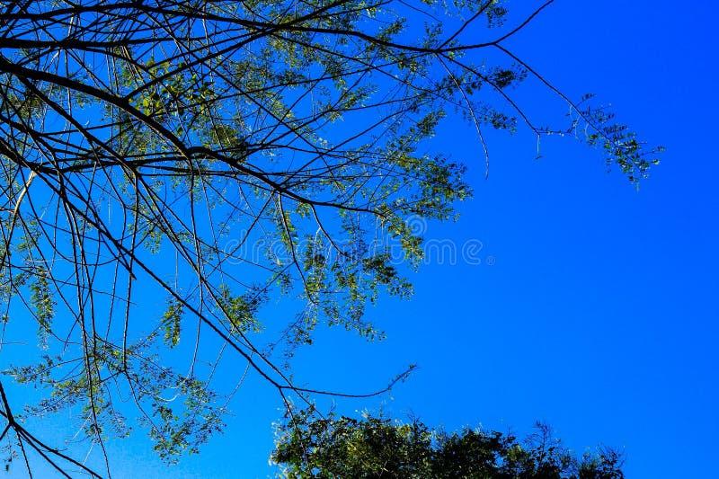 Olhando a parte superior verá as árvores, as folhas e o céu azul foto de stock