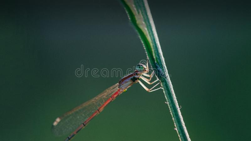 Olhar agradável do tiro bonito do close-up da libélula imagens de stock royalty free