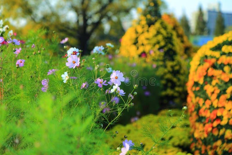 Olhar da flor branca fresco na manhã imagens de stock royalty free