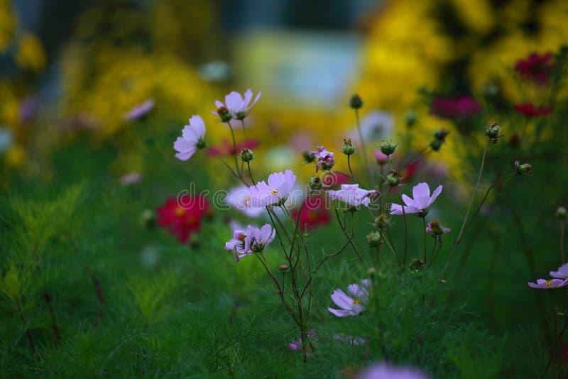 Olhar da flor branca fresco na manhã fotografia de stock