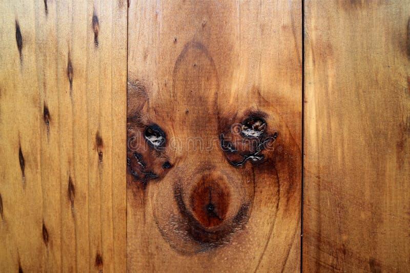 Olhar de surpresa do cachorrinho um teste padrão natural como da parede exterior de madeira na cidade dos oásis do Chile do norte fotografia de stock royalty free
