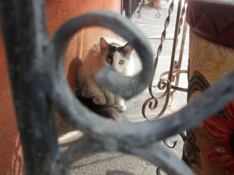 olhar do gato imagem de stock