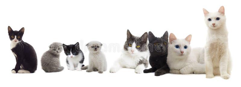 Olhar dos gatos fotos de stock royalty free