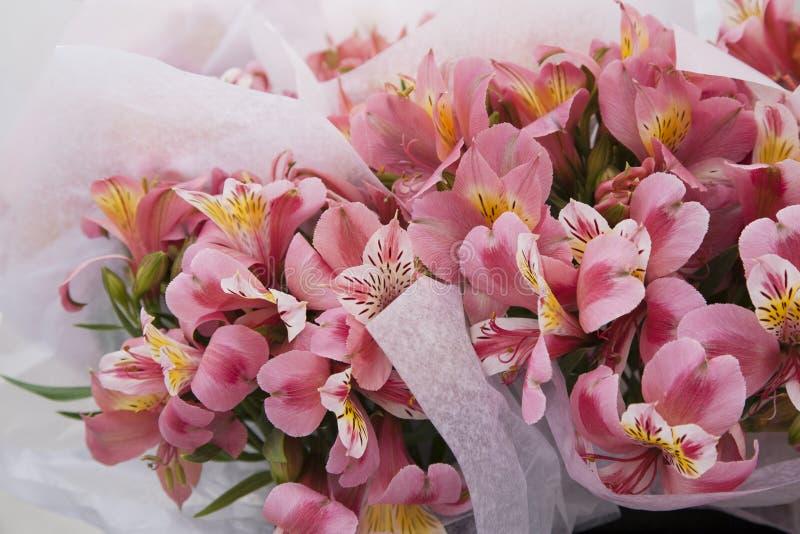 Olhar e cheiro da sensação no ramalhete cor-de-rosa do amor com pontos amarelos foto de stock