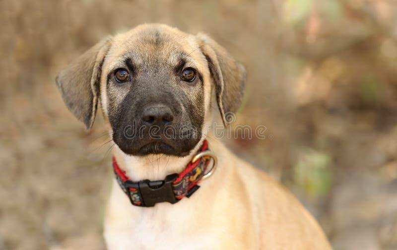 Olhar fixamente curioso do cão fotografia de stock royalty free