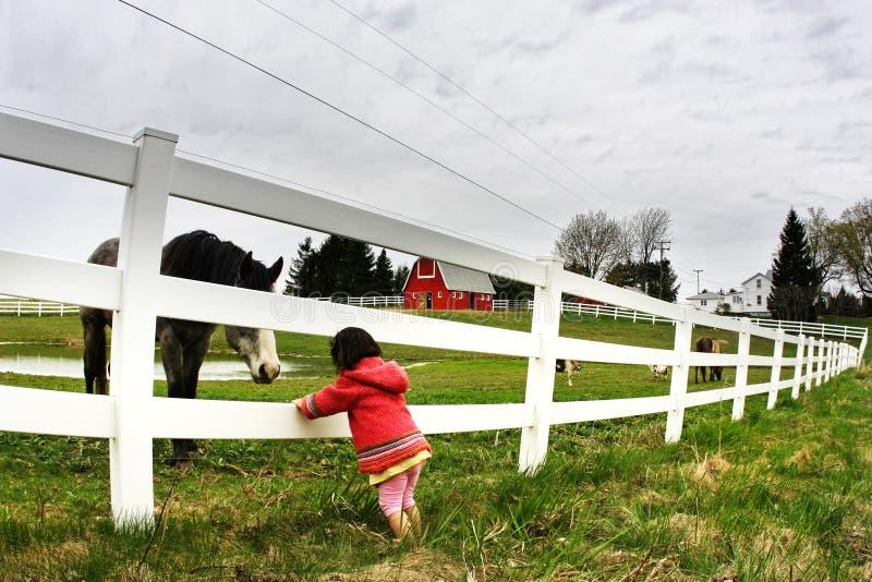 Olhar fixamente da criança e do cavalo imagens de stock royalty free