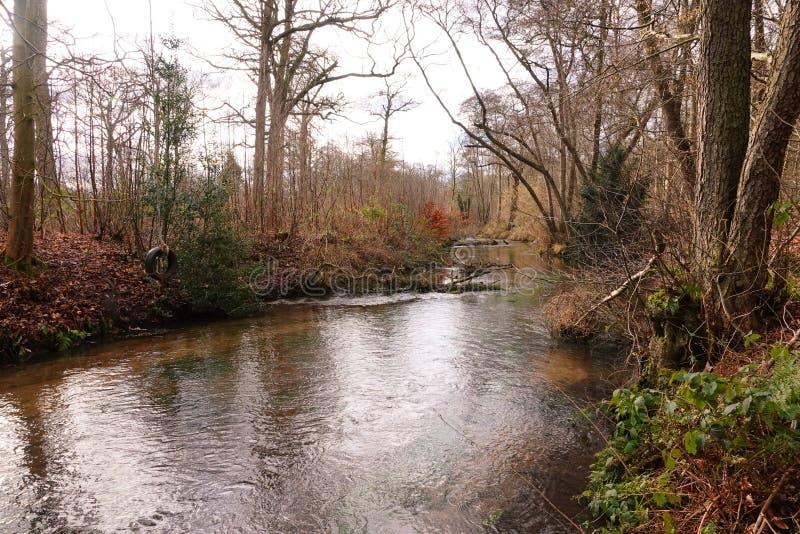 Olhar rústico ao longo do rio foto de stock royalty free