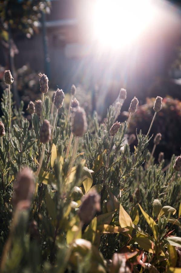 Olhe acima ao Sun foto de stock