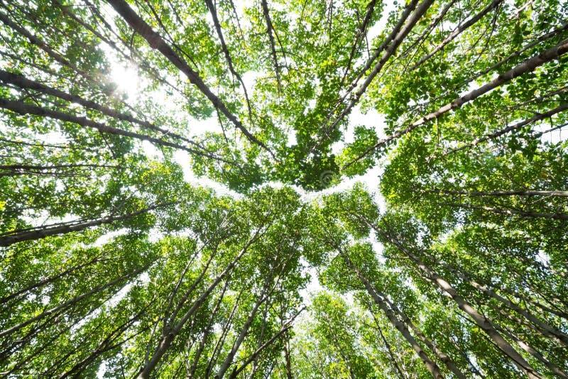 Olhe acima em florestas dos manguezais fotos de stock