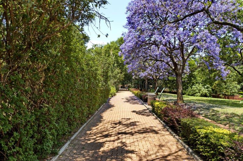 Olhe da caminhada do jardim zoológico de Joanesburgo foto de stock royalty free