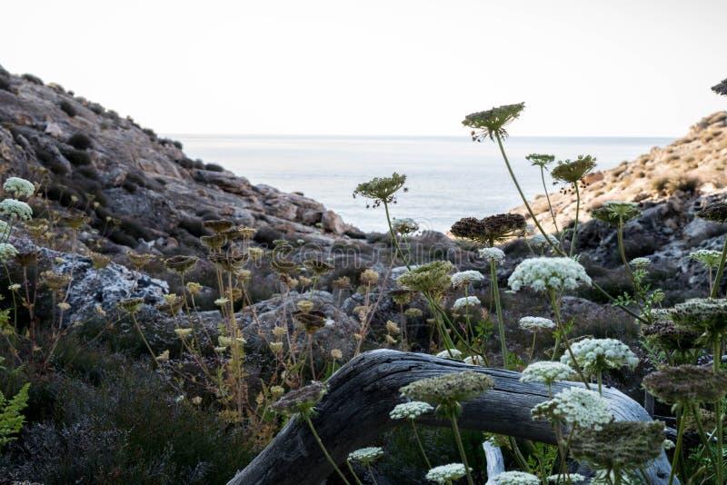 Olhe em uma baía na ilha de Ibiza fotografia de stock