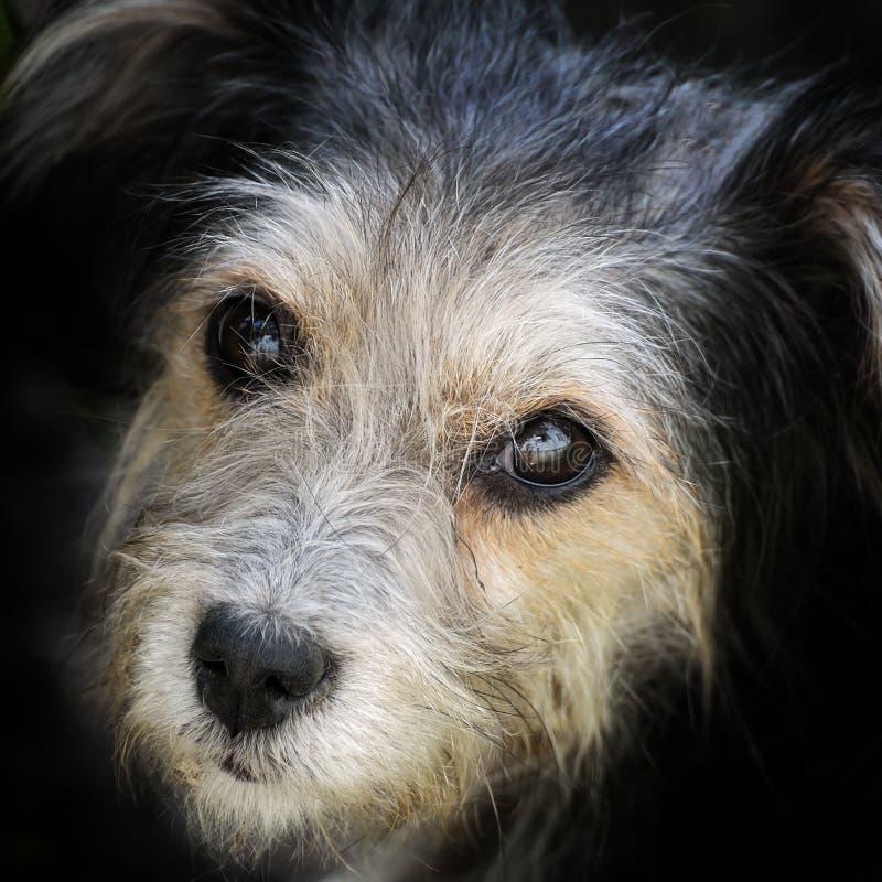 Olhe o cão disperso com fome fotos de stock