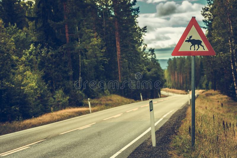 Olhe para o sinal de estrada dos alces fotografia de stock royalty free