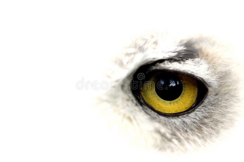 Olho amarelo grande da coruja imagem de stock
