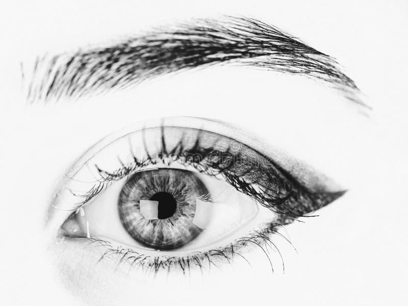 Olho da mulher com composição e as pestanas longas imagem de stock royalty free