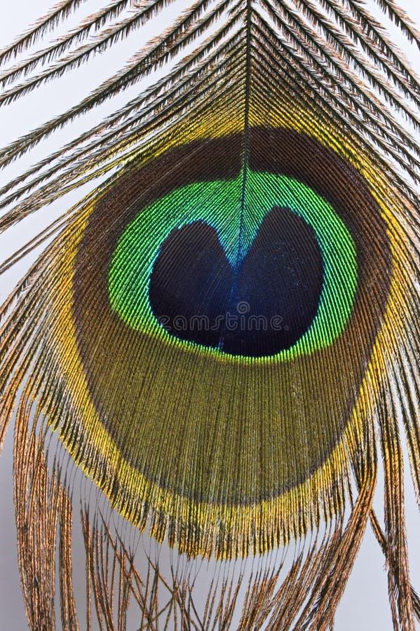 Olho da pena do pavão imagem de stock
