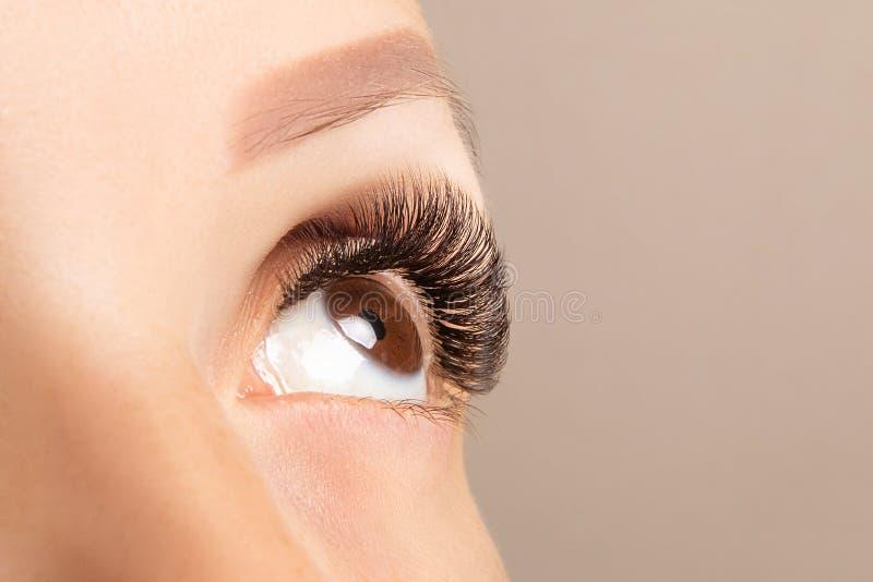 Olho de Brown com o close up longo bonito dos chicotes Extensão do chicote do olho da cor de Brown, volume 3D ou 4D Cuidado da pe fotografia de stock royalty free