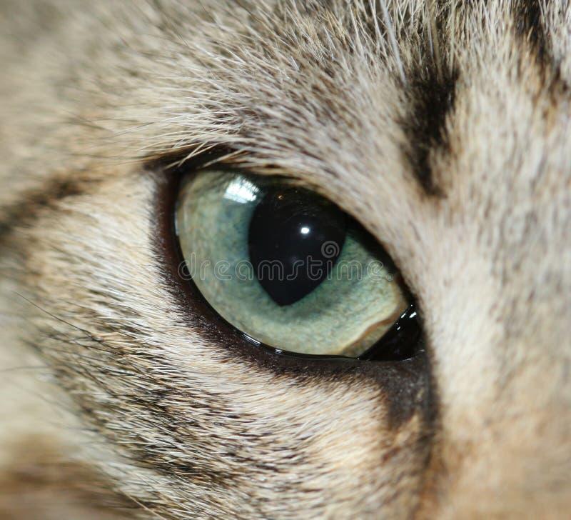 Olho de gato imagem de stock