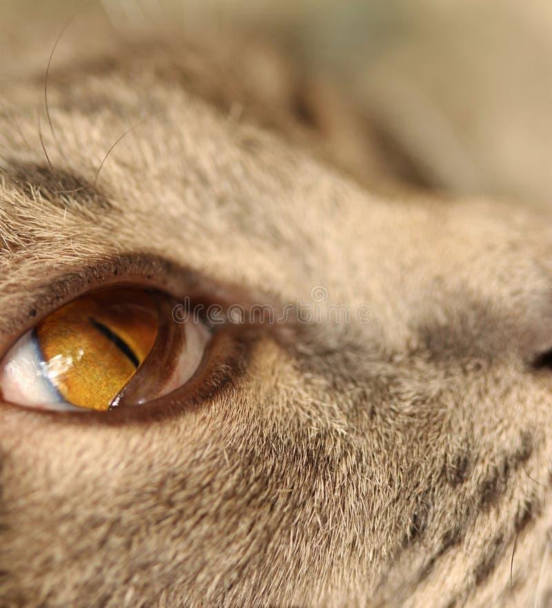 Olho de gato 2 imagem de stock