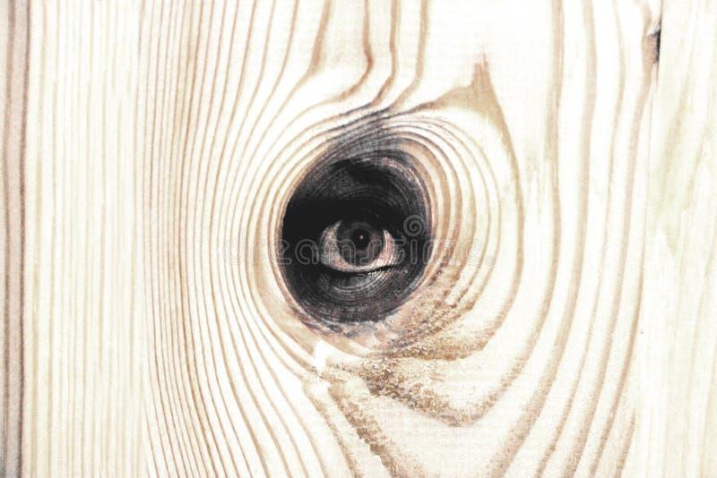 Olho de madeira ilustração stock