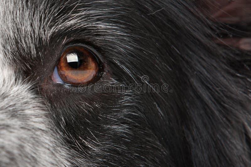 Olho do cão do Close-up imagens de stock royalty free