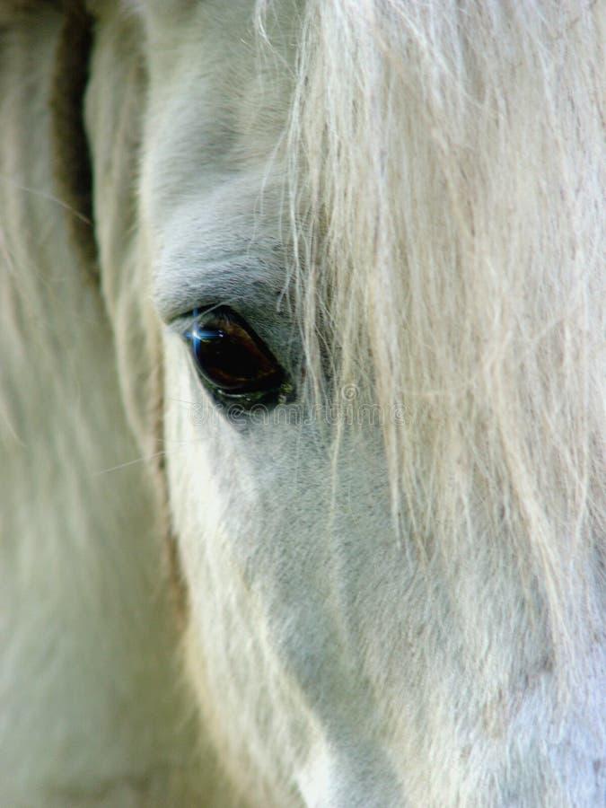 Olho do cavalo fotografia de stock royalty free