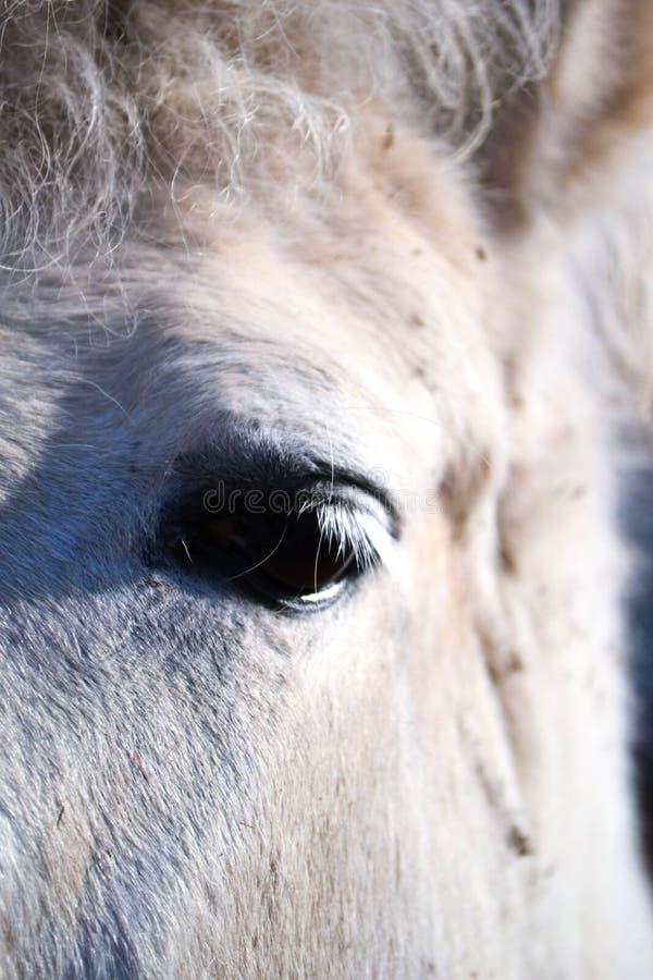 Olho do cavalo branco imagens de stock royalty free