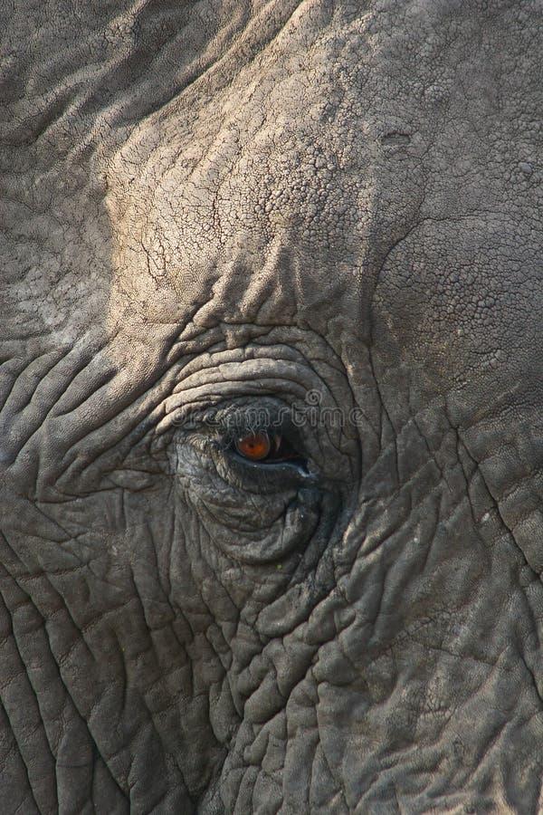 Olho do elefante africano fotografia de stock royalty free