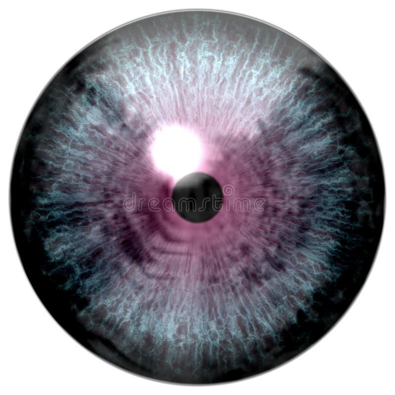 Olho do pássaro O olho animal com roxo coloriu a íris, opinião do detalhe no bulbo do olho ilustração royalty free